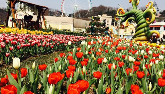 Everland remains South Korea's most-visited attraction
