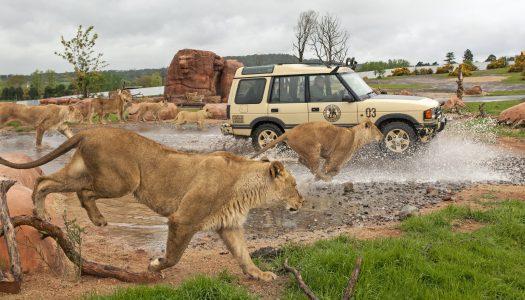 Looping group buys West Midlands Safari Park