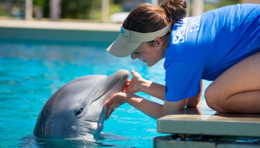 Get up close and behind the scenes with SeaWorld's fascinating animals at Inside Look