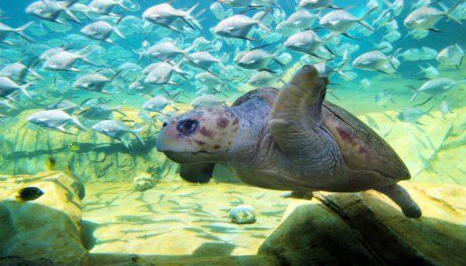 SeaWorld San Antonio opens Turtle Reef habitat and new thrill rides