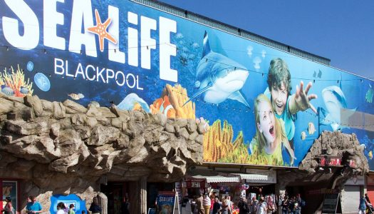 Merlin Entertainments teams up with eOne to bring PJ Masks to Sea Life aquariums