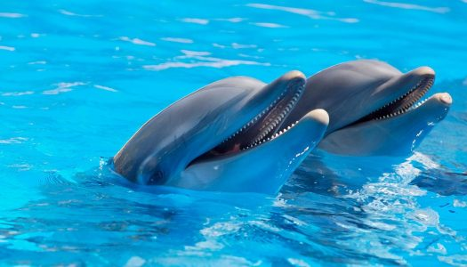 PETA campaign ends dolphin riding at SeaWorld
