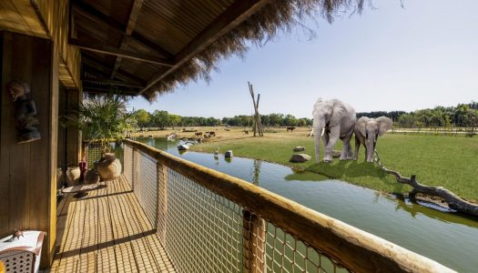 First-of-their-kind Safari Lodges are coming to West Midland Safari Park