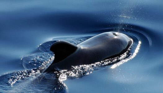 Whales: Living with Giants exhibit coming to Clearwater Marine Aquarium