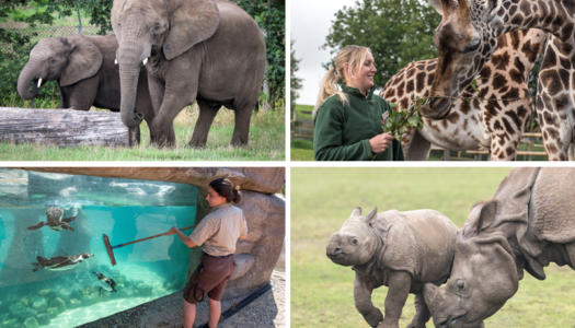 West Midland Safari Park set to reopen