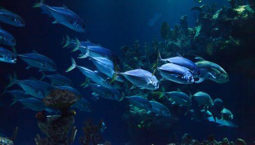 New aquarium opens in Mall of Dilmunia, Bahrain