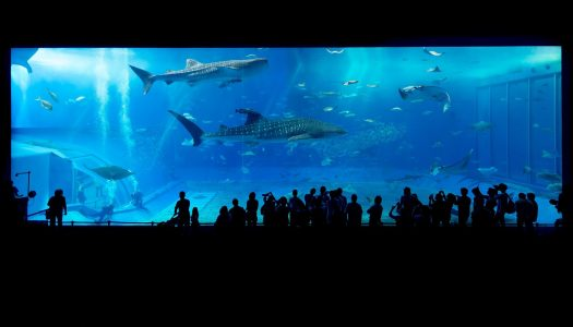 SeaWorld Abu Dhabi to be home to world's largest aquarium